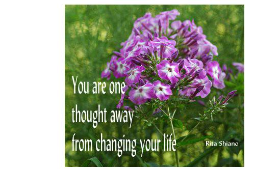 one thought - purple flower